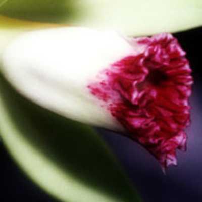 Αρωματικό Χώρου Vanilla