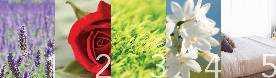 Οι 5 Χαλαρωτικές Μυρωδιές της Άνοιξης